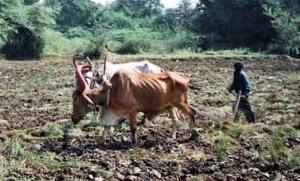 ploughing